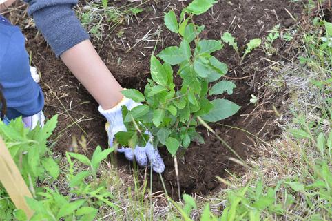 20170710105704 1 - 「Sansan」で取り込まれた名刺枚数に応じて木を植えるプロジェクト 「Scan for Trees」による植樹合計本数が1,000本を突破